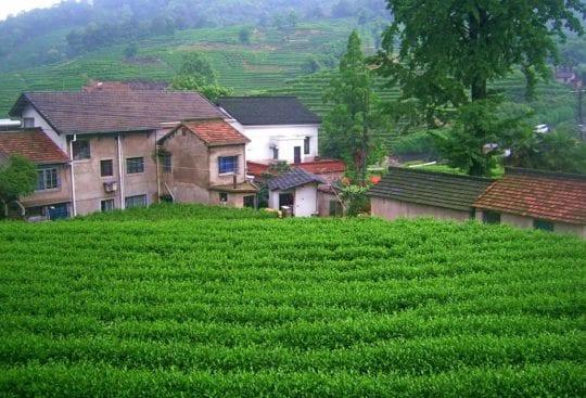 Wioska i herbaciana w Hangzhou - życie w Chinach