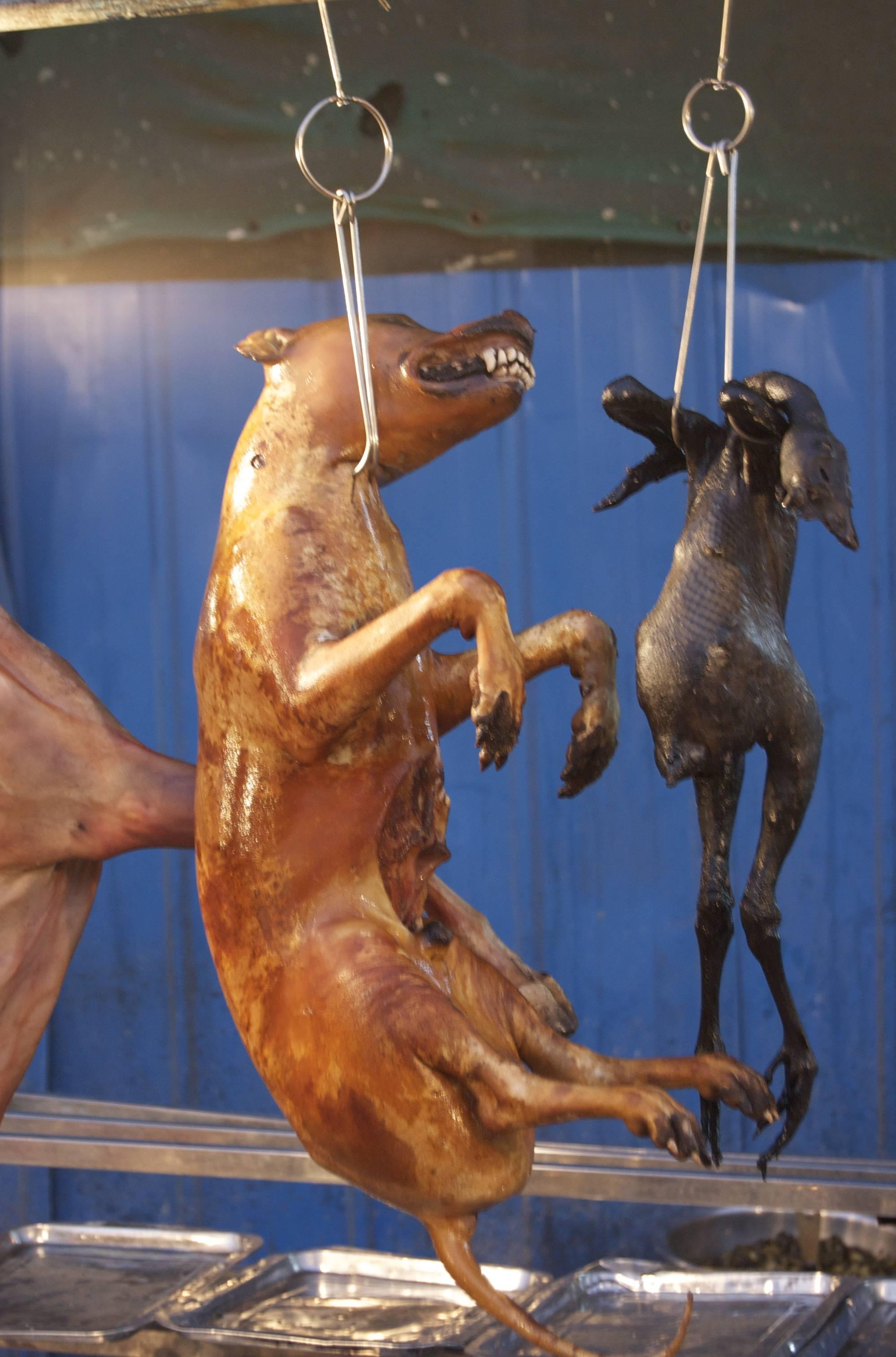 Upieczone psy kontrowersyjny festiwal w chinach