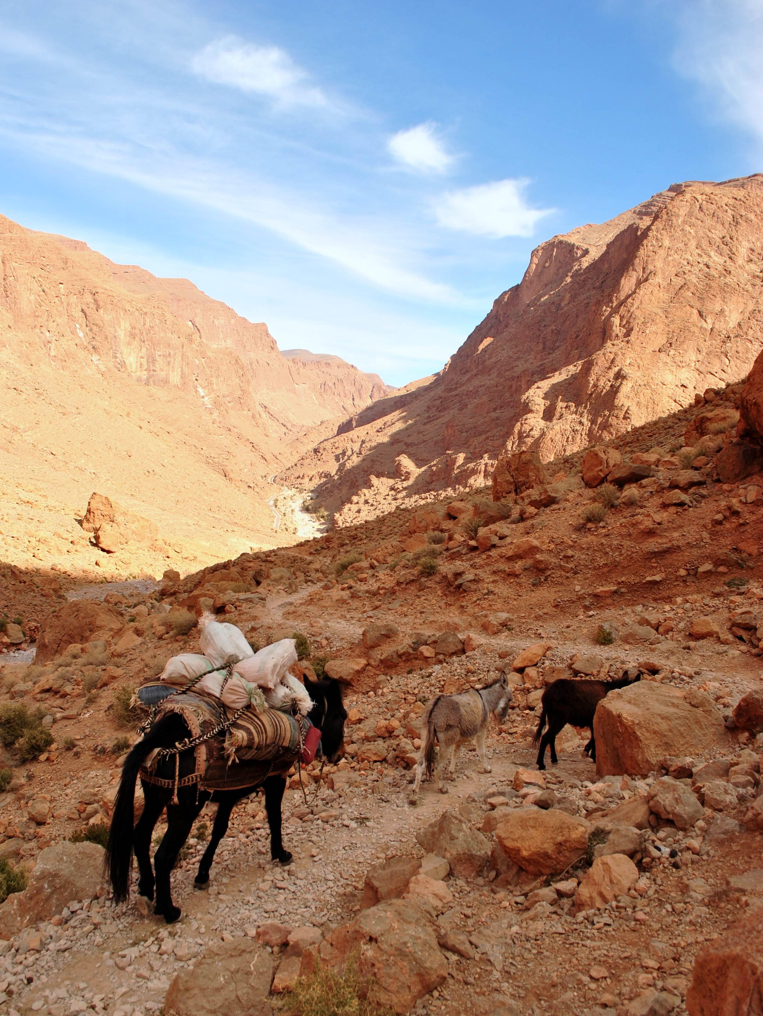 Maroko - wakacje. Wąwóz Todra Maroko Afryka