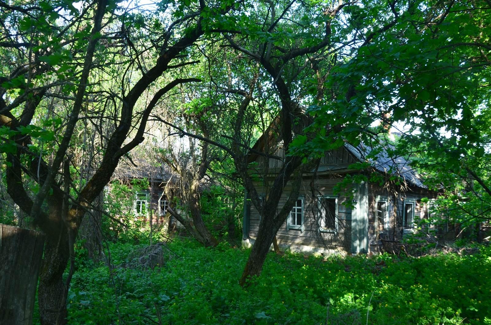 Las czarnobyl - Białoruś zona