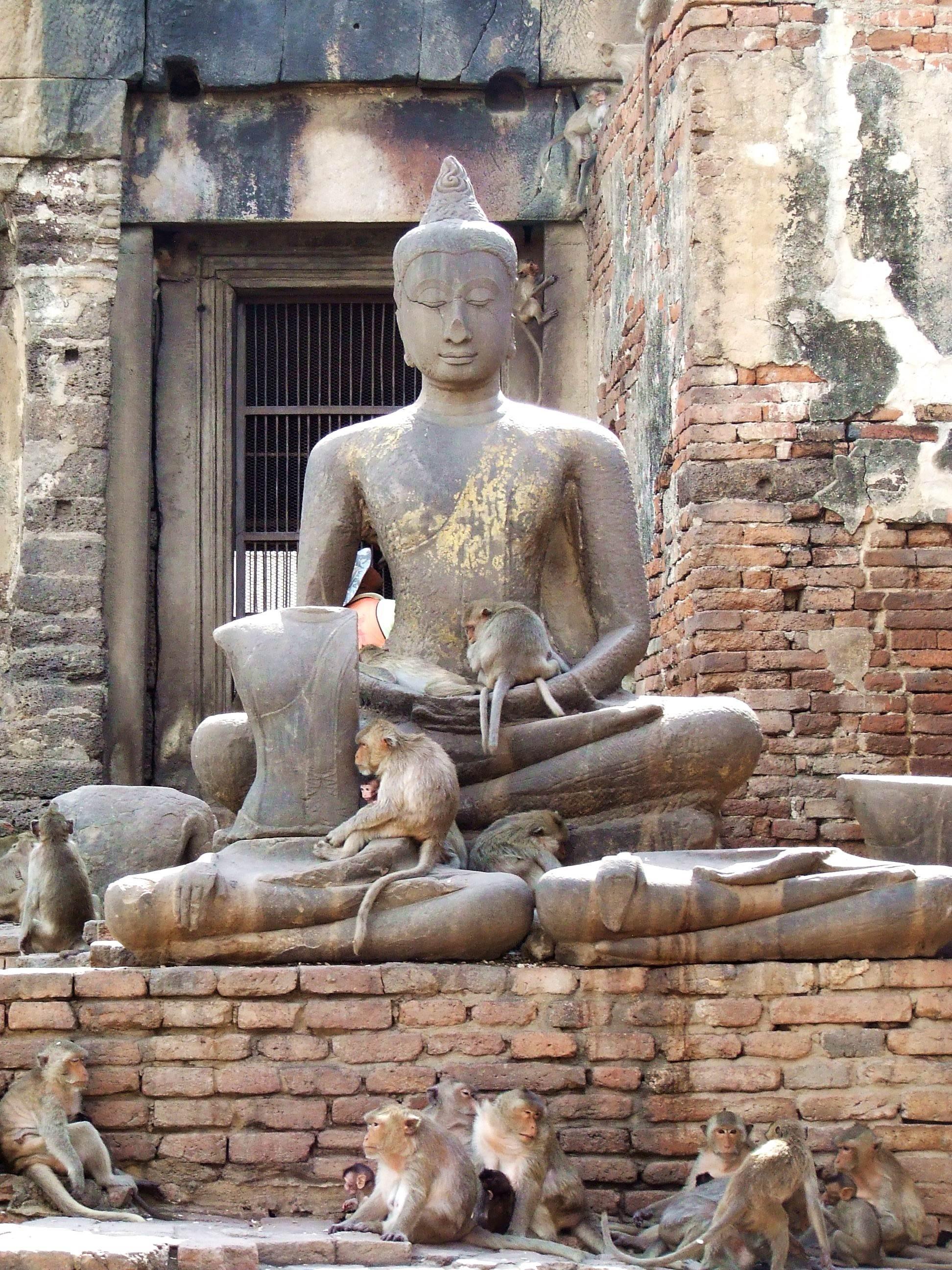 Małpy w świątyni buddyjskiej