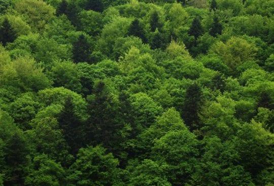 Las w Beskidzie Niskim