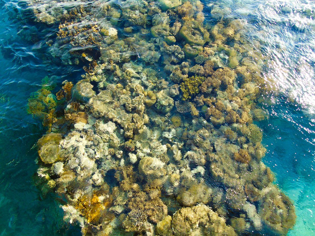 Izrael szczyci się piękną rafą koralową