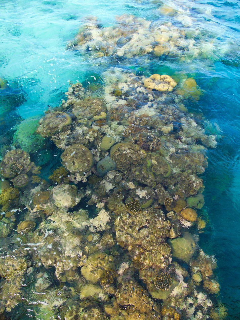 Rafa koralowa w Izraelu jest warta obejrzenia