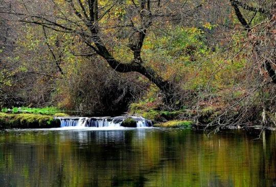 Skąd czerpać wodę i pozywienie podczas survivalowych eskapad? Dowiecie się u nas!