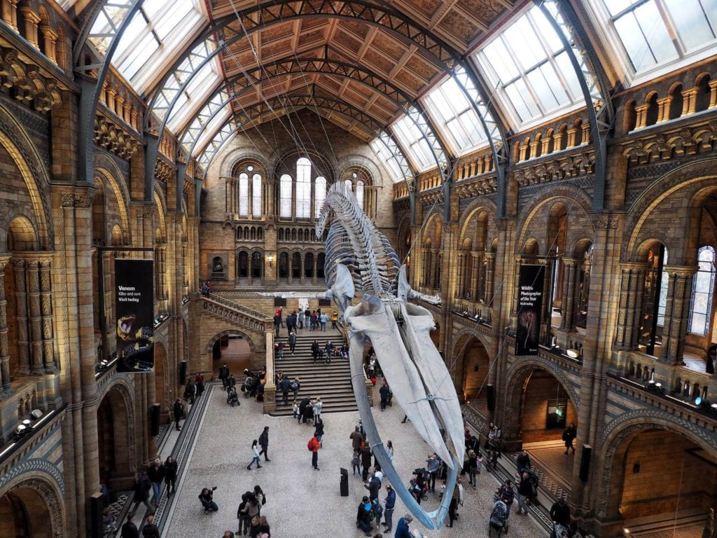 Natural History Museum Londyn