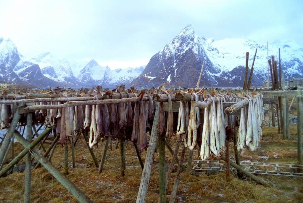 Sztokfisz czyli suszony dorsz, Norwegia