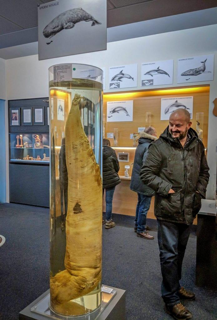 Penis wieloryba