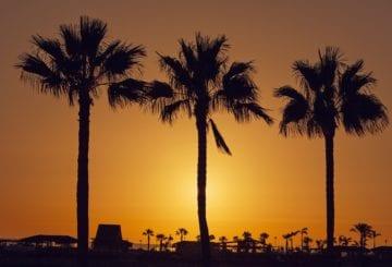 wyspy kanaryjskie palmy zachód słońca