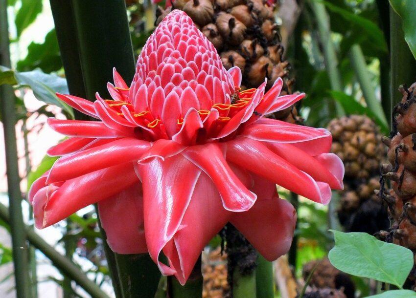 kwiat tropikalny