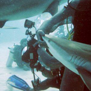 Pływanie z rekinami - Bahamy