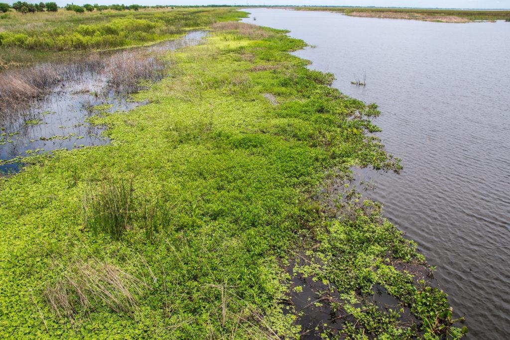 Lake Okeechobee Park Narodowy Everglades
